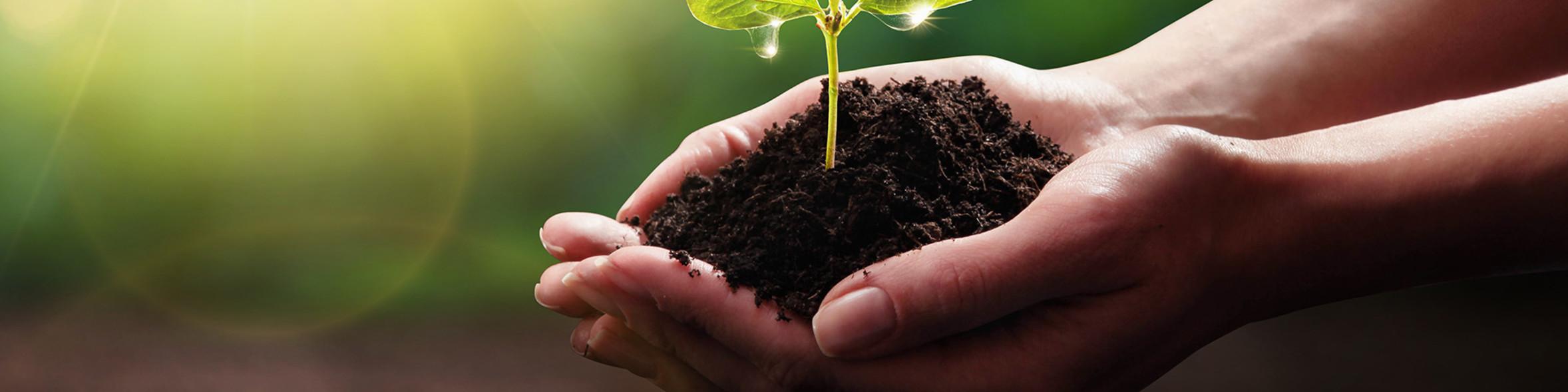 Nachhaltige Verpackungen, nachhaltig, nachhaltige To-Go Verpackungen, ressourcenschonend, umweltschonend